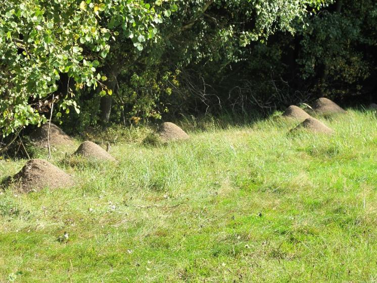 Ekoton - rozhraní mezi loukou a lesem na lokalitě Prvníky obývá perspektivní populace velmi vzácného mravence pastvinného (Formica exsecta), foto Pavel Bezděčka.
