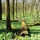 PR Jedlový les a údolí Rokytné, 20.4.2015, foto Vojtěch Kodet