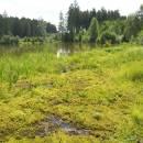 Pilný rybník, 31.7.2012, foto Vojtěch Kodet