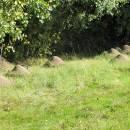 Ekoton - rozhraní mezi loukou a lesem na lokalitě Prvníky obývá perspektivní populace velmi vzácného mravence pastvinného (<i>Formica exsecta</i>), foto Pavel Bezděčka.