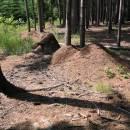 Na lokalitě Vojtův vrch žije největší dosud známá superkolonie mravence lesního (<i>Formica rufa</i>) čítající přes 1 700 kupovitých hnízd, foto Pavel Bezděčka.