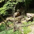 Výrova skála, údolí Rokytné, 24.6.2015, foto Karel Tajovský