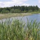Olešský rybník, 29.6.2010, foto Vojtěch Kodet