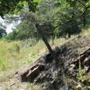 V oblasti regionálního biocentra Ketkovice stále nalézají útočiště vzácné teplomilné a suchomilné druhy mravenců, foto Pavel Bezděčka.