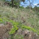 Myrmekologicky nejcennější částí NPR Mohelenská hadcová step je tzv. skalní nebo také pustinná step, foto Pavel Bezděčka.