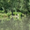 Jezdovický rybník, 16.6.2007, foto Vojtěch Kodet