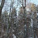 PP Horní Nekolov, 24.1.2004, foto Vojtěch Kodet